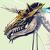 daison/ハチミツドリル